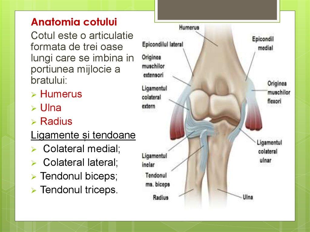 durere la nivelul articulației umărului și cotului