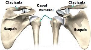 crăpături la mâini și doare inflamații frecvente ale articulațiilor
