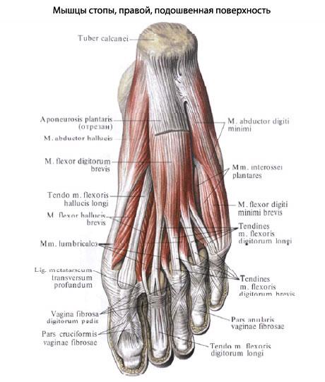 articulațiile mușchilor picioarelor decât a trata