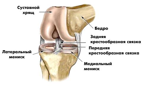 medicamente pentru tratamentul artrozei comune