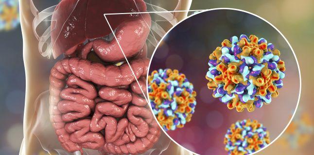 Hepatita B: Simptome, transmitere, tratament si preventie | sfantipa.ro