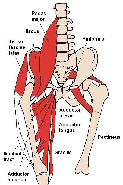 diagnostic pentru durere la nivelul articulațiilor șoldului unguent pentru durere în articulații nu este scump