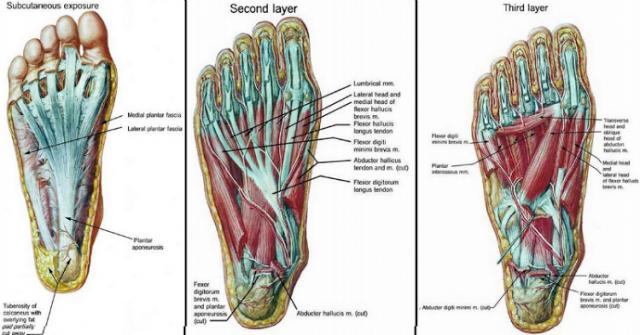 dureri de genunchi online dureri la nivelul umerilor cum se tratează unguentele