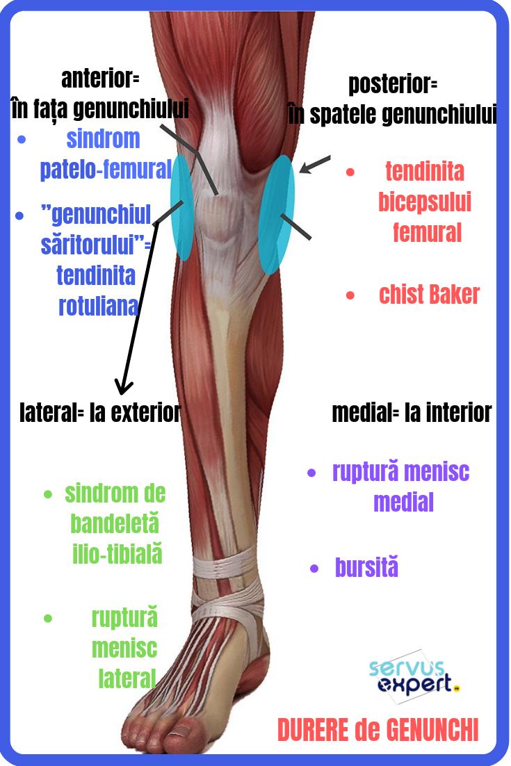 dureri la nivelul genunchiului uman din interior