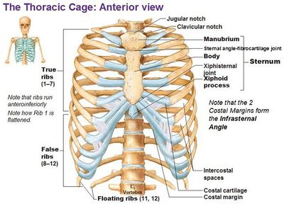 tratament articular sternum-claviculă tratament medicamentos dureri de umăr