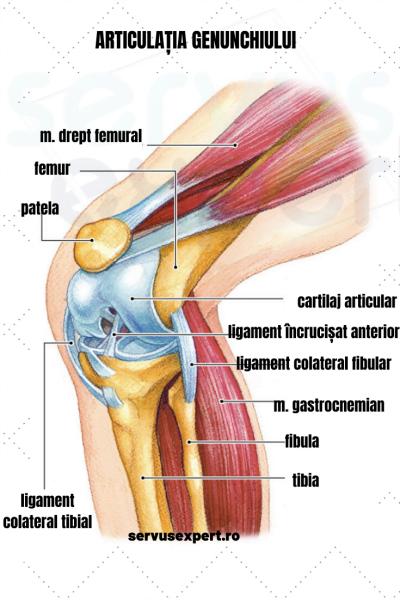articulațiile genunchiului cu întindere