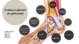 dureri de flexie a gleznei toate bolile articulației genunchiului