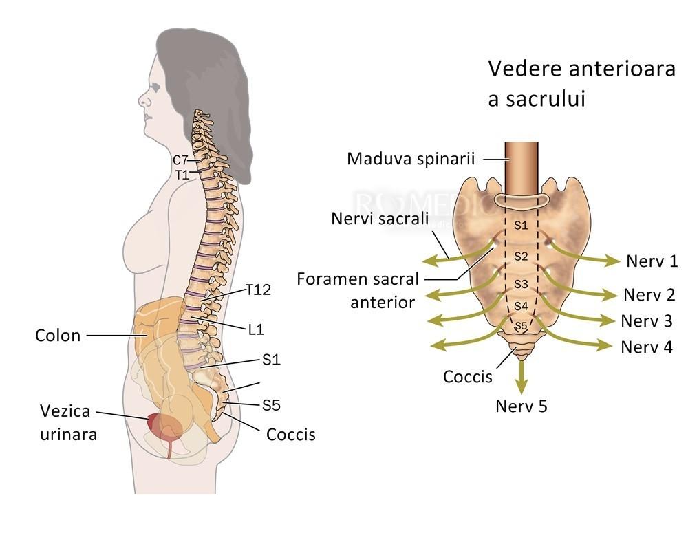cum doare articulația coloanei vertebrale tratamentul umflat la genunchi