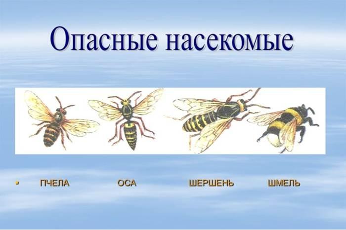 Albine moarte pentru dureri articulare