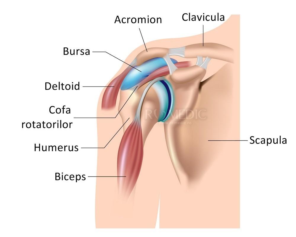 dislocarea posterioară a tratamentului articulației umărului artroza și sinovita genunchiului