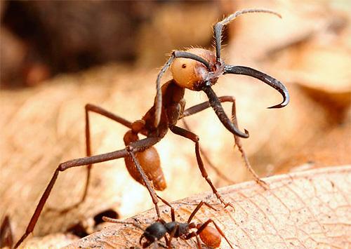 Tratamentul furnicilor articulare Gama de afectiuni ce pot fi tratate