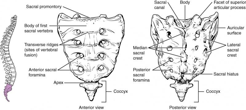 os ovarian și unguent articular