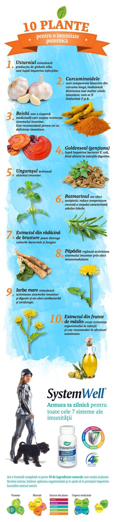 Plante medicinale pentru tratarea articulațiilor picioarelor - Bara principală