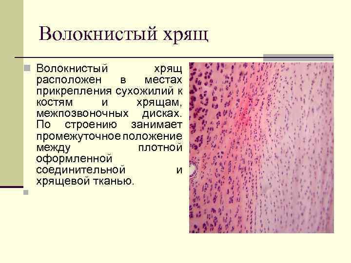 restaurarea preparatelor de țesut cartilaj