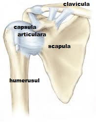 cauze de durere în articulația umărului mâinii stângi