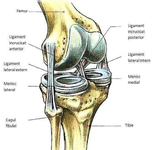 dureri articulare pielonefritice cronice de ce rănesc articulațiile de pe mâinile degetelor