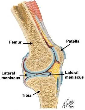 inflamația meniscului simptomelor genunchiului