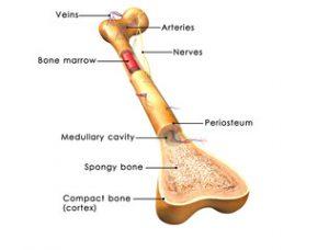 tratament comun cu creozot lichidul în articulația cotului nu doare