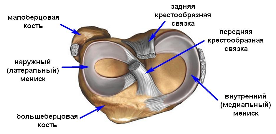 deteriorarea meniscului intern al genunchiului 3 grade cum se tratează calcifierea articulației