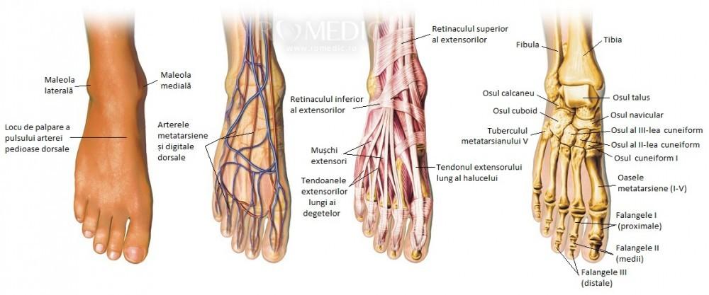 Nivelul durere în partea de sus a piciorului atunci când se odihnește noștri