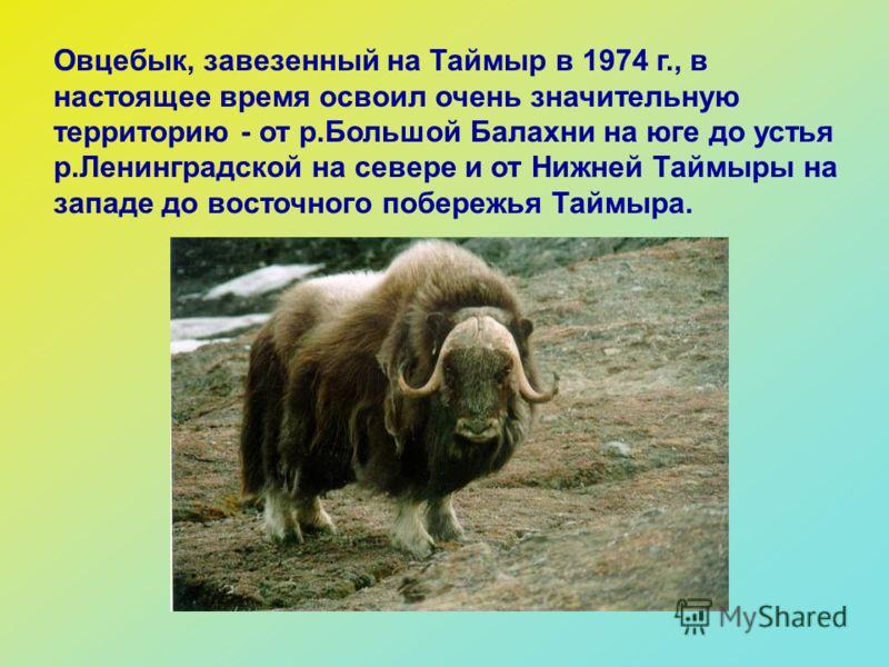 unguente pentru osteochondroza cumpara Tratamentul articulațiilor Murmansk
