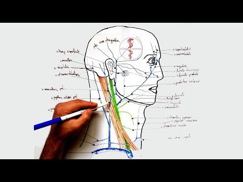cum se tratează calcifierea articulației ce tratament se ia pentru picioare umflate