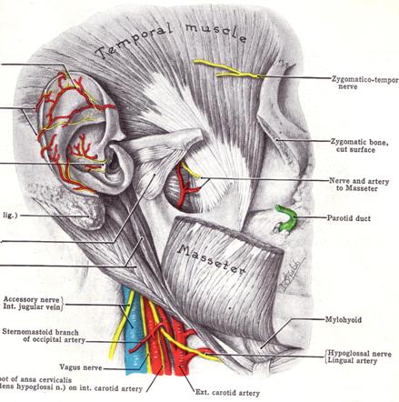 durere, plus articulația falangiană tratament complex al inflamației articulare