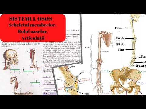 articulațiile rănesc durerile întregului corp