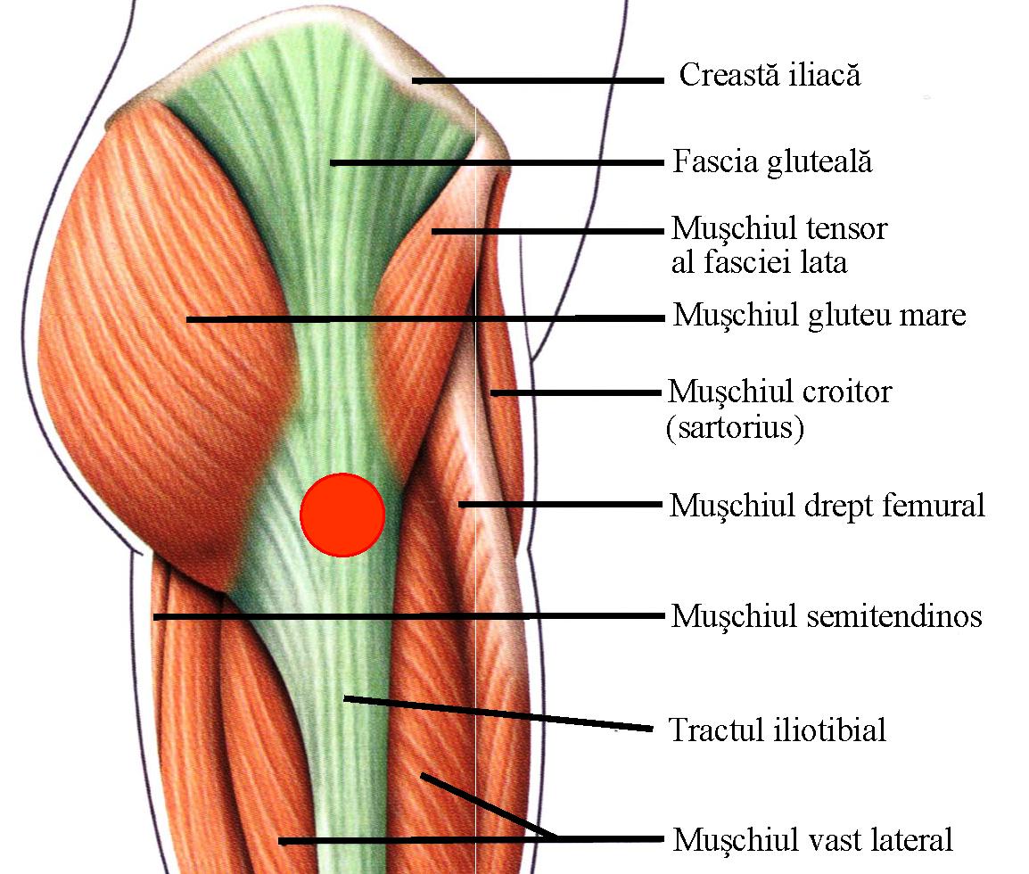 gâtul șoldului și articulația doare dureri la nivelul articulațiilor șoldului când mersul cauzează