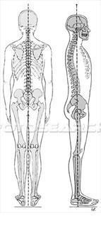 Compoziția tratamentului articular - MUVON PLUS