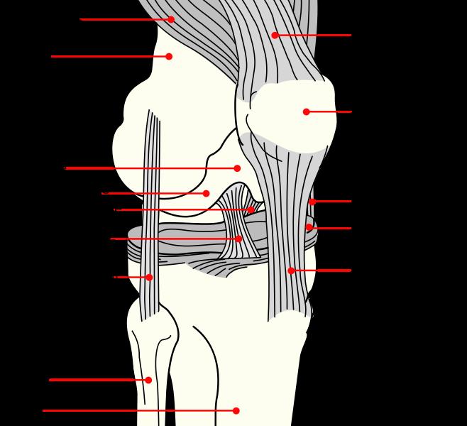 artrite reumatoide mâini pastile de tratament pentru artroza