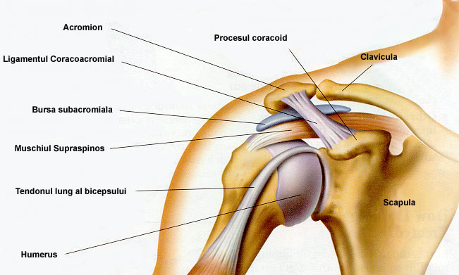 deteriorarea articulației umărului și a umerilor
