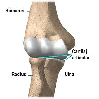 durere în partea superioară a articulației cotului