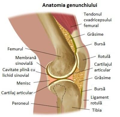 articulația genunchiului doare la coborârea scărilor