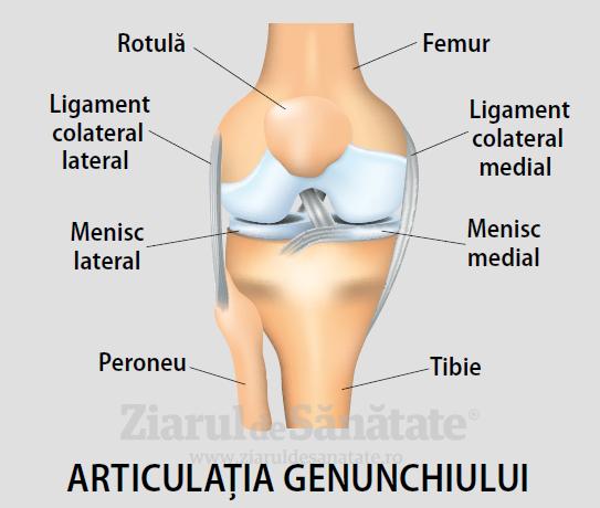 Elementele componente ale articulatiei genunchiului