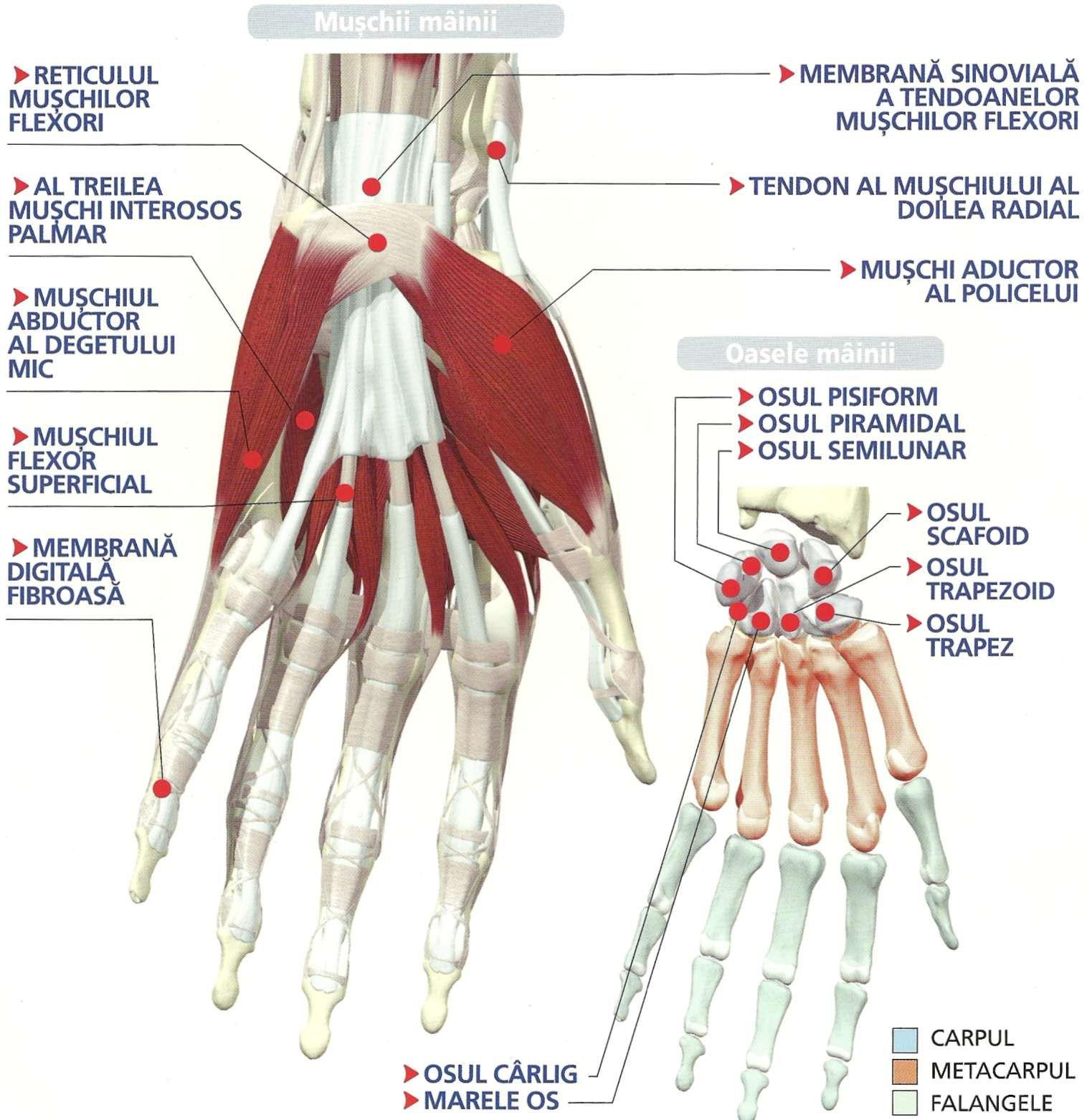 tratamentul și refacerea cartilajului genunchiului