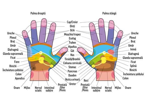 durere în articulațiile brațelor la ridicarea greutăților