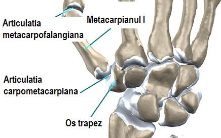 tratamentul vivaton al artrozei