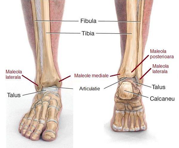 durere în luxația articulației piciorului