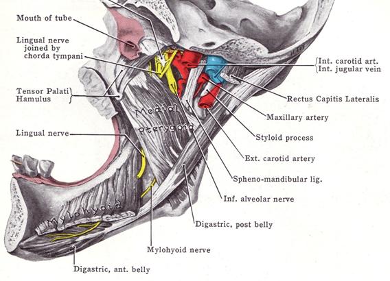 durere, plus articulația falangiană ce va ajuta dacă rănile articulațiilor