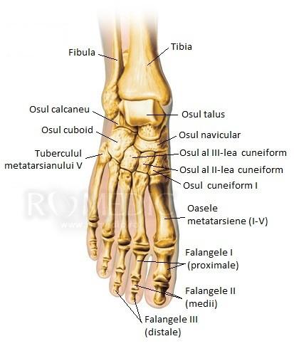 Durere în tratamentul articulației piciorului