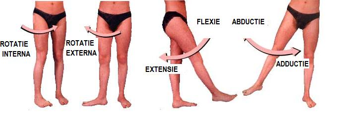 dureri de flexie a șoldului