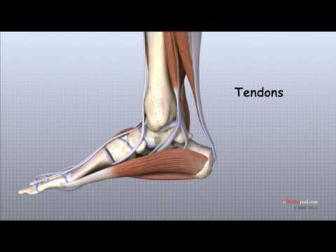 artroza articulației gleznei 2 grade