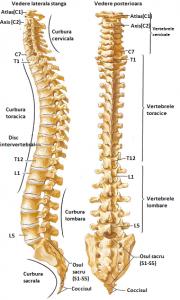 forum de tratare a artrozei coloanei cervicale