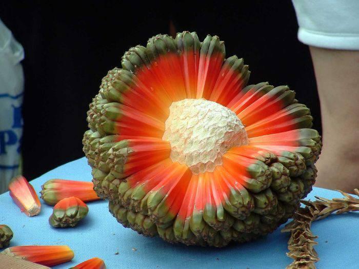 fructe sudice pentru tratament comun