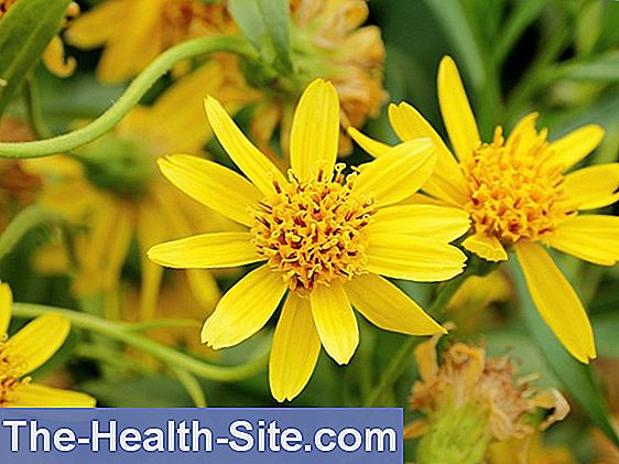 Remedii homeopate pentru durerea articulației genunchiului