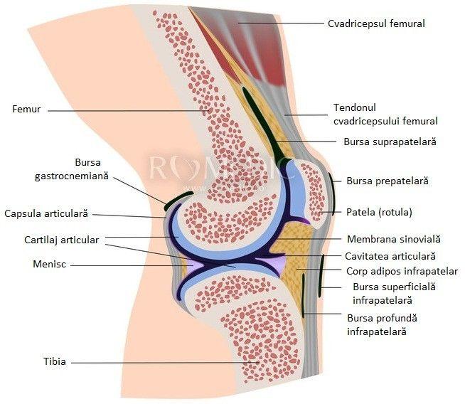ureaplasmoza ca durere articulară când articulația de pe degetul arătător doare